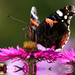colorful flower makro butterfly nature
