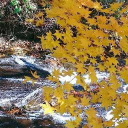 japan hokkaido eniwa autumn colorful