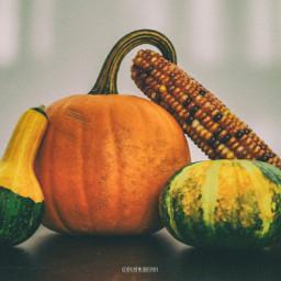picsart autumn canada farm pumpkin