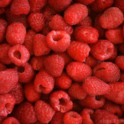 fresh raspberries red fruit nature