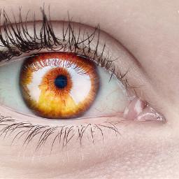 eye edit photography mypic myedit freetoedit