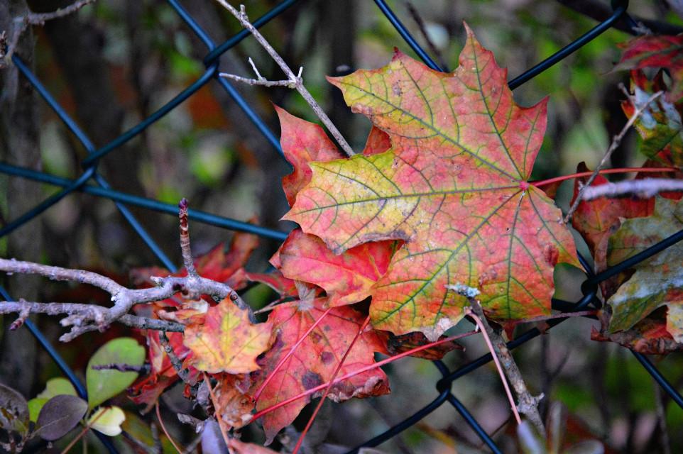#colorful #nature #autumn #fall