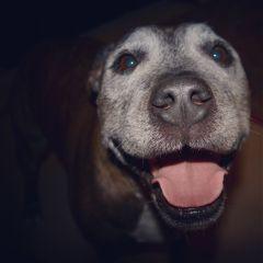 animals petsandanimals dog photography