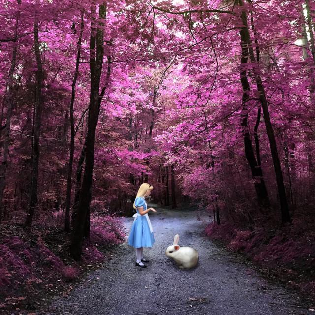 When all else fails, ask the rabbit. #interesting #art #surreal #surrealism #aliceinwonderland #fairytail