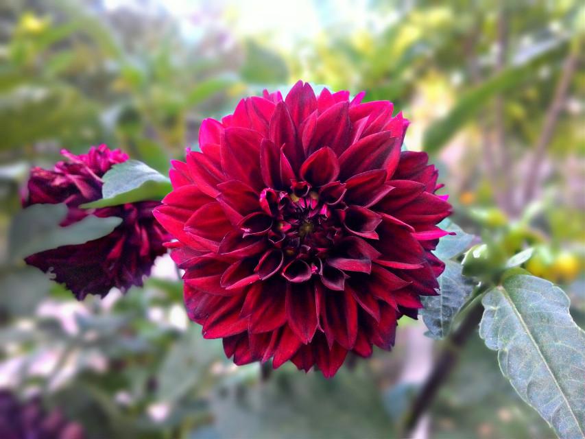 #flower #artofthenature