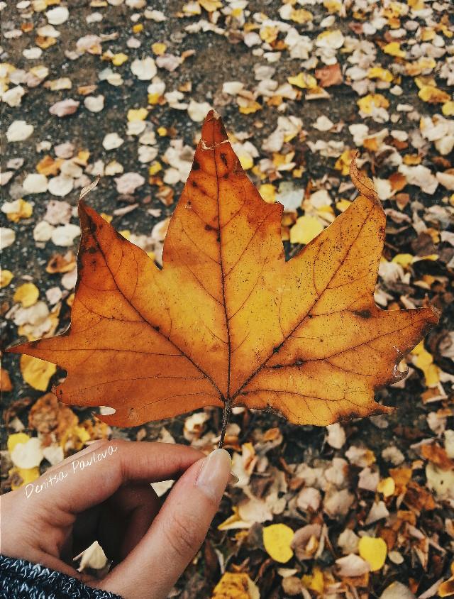 🍁   #leaf #fall #hand #autumn #wpptexture