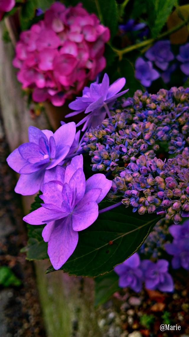 #lomoeffect #colorful #seasons