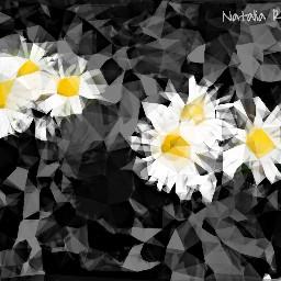 nature flowers blackandwhite colorsplash polygoneffect