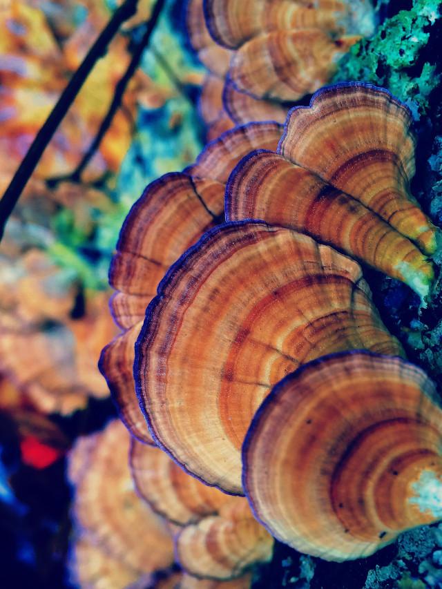 #mushroom #fungus #fall #fungi #nature #woods #hike #lightcross