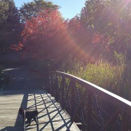 noedit nature sunflair autumn fall