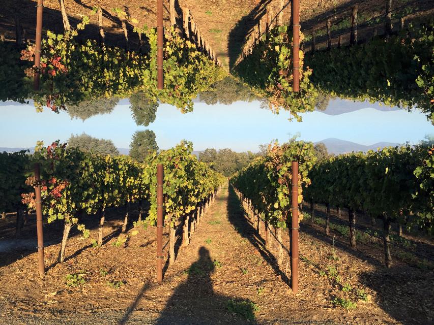 Lost in #napavalley #winery last Saturday