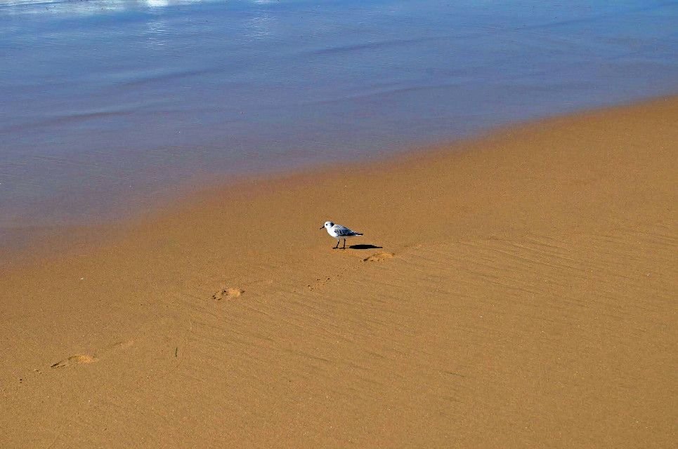 Little bird.  #california #morning #fall#ocean#shoreline