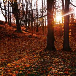 wppfallcolors nature freetoedit seasons fall