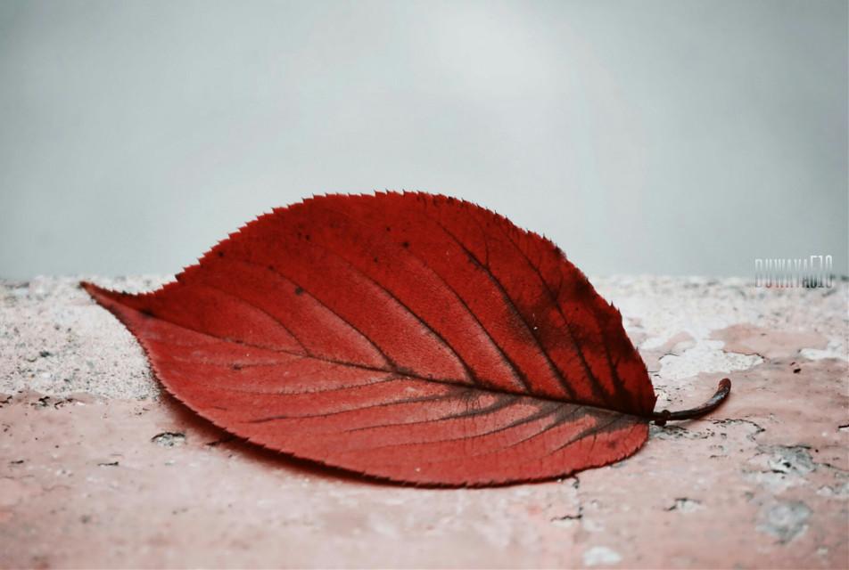 #seafoam #fall #dailyinspiration #upclose #photography