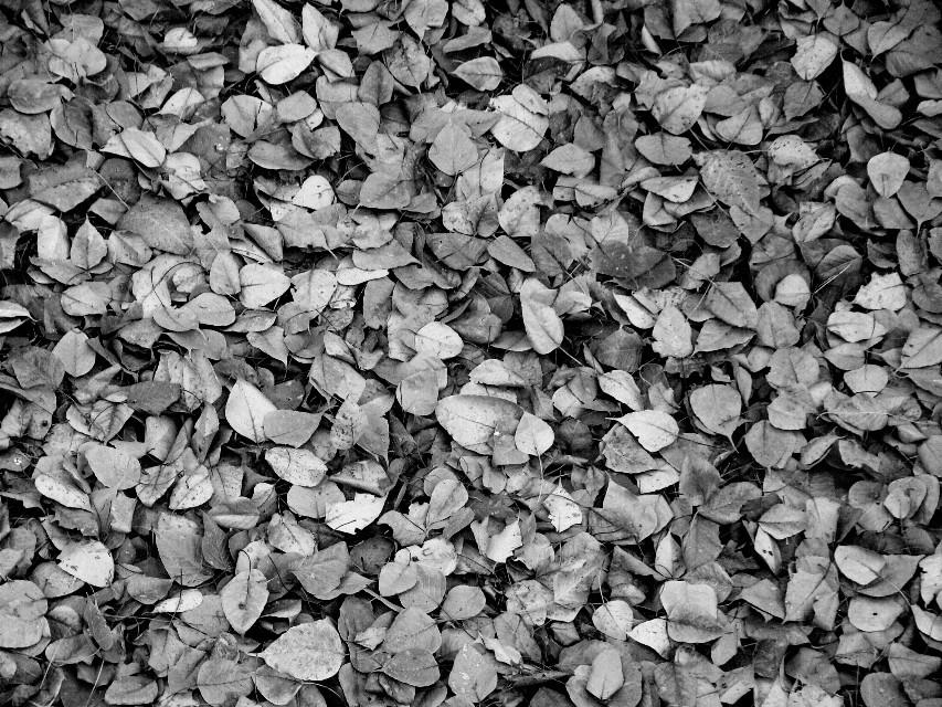#blackandwhite #leaf