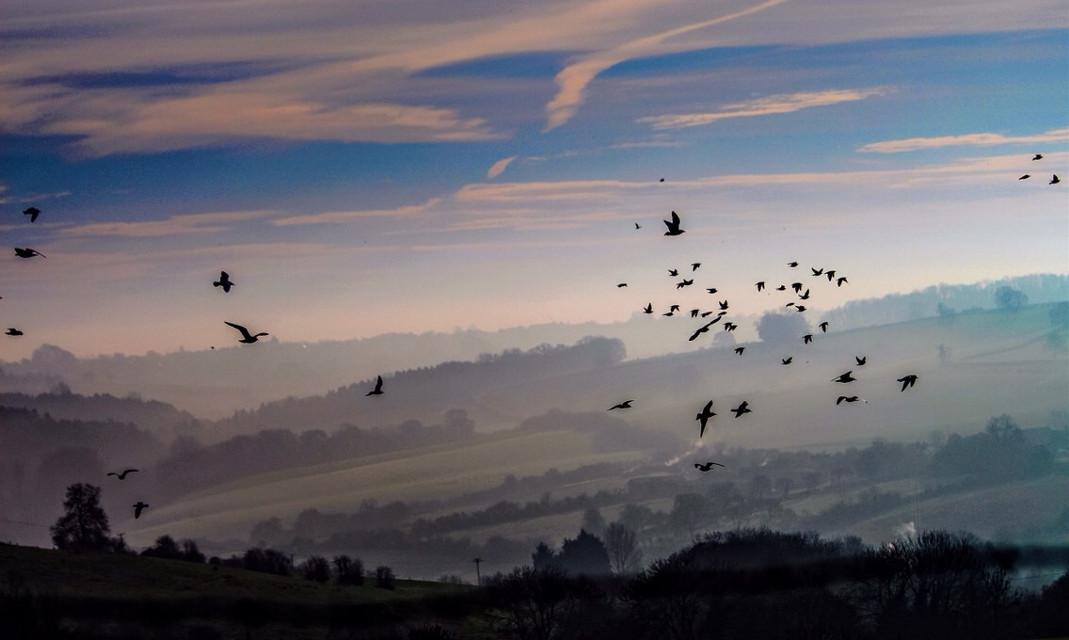 #flight over #misty #hills #somersetengland #movement #birds