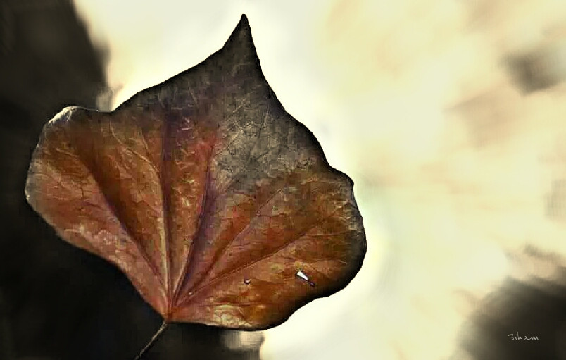 #Fall #autumn #photography #nature