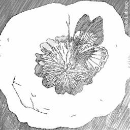 plumbago flower b butterflies