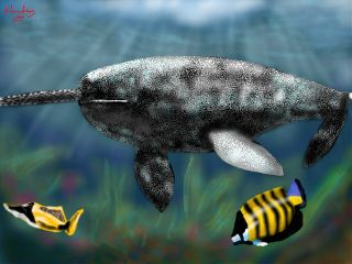 wdpnarwhal digitalart digitalpainting art drawingart