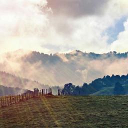 nobody nature fog morning