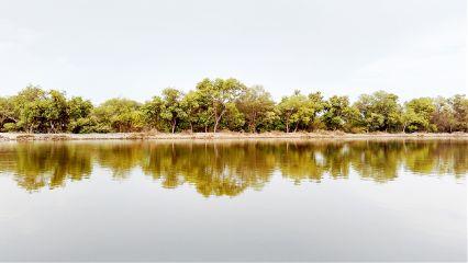 mangrove photography travel freetoedit summer