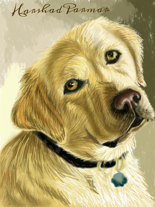 #wdpportrait #Labrador retriever#golden-browncoat#petsandanimals #loveable.. Hope u all like it my friends. Thanx in advance for  Ur likes, votes & repost if any.