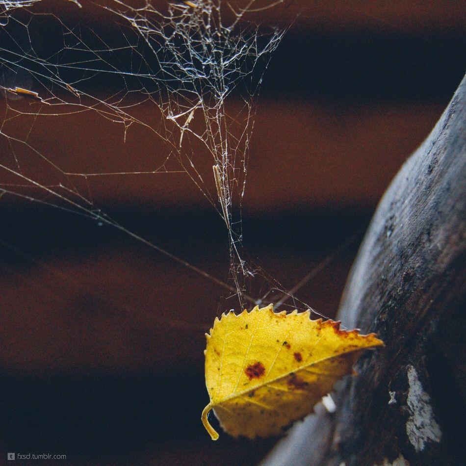 #autumn #leaf #yellow #net #web #spiderweb #macro #beautiful #nature