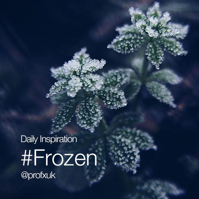 frozen popular hashtags