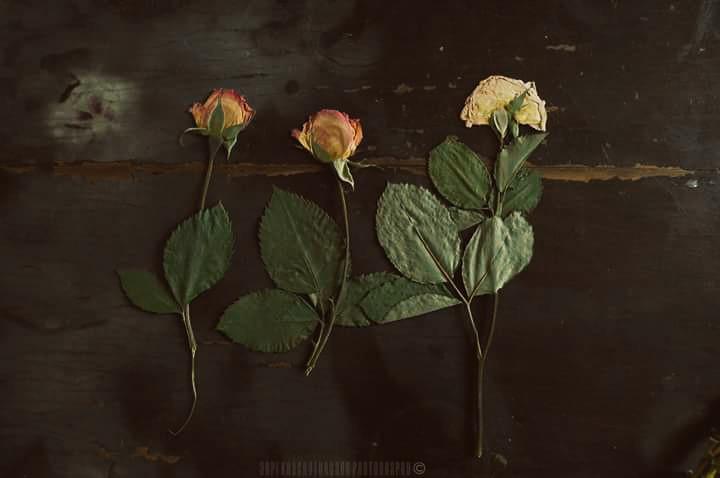 #flower #old  #photography  #arpikhachaturyanc