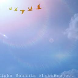 madewithpicsart photography nature sky bird