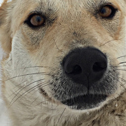 dog mansbestfriend cute love photography