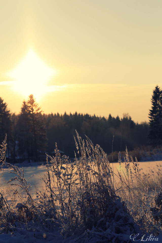 #seasons #nature  #photography #freetoedit