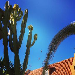 sandiego sky sunlight wildplant birds