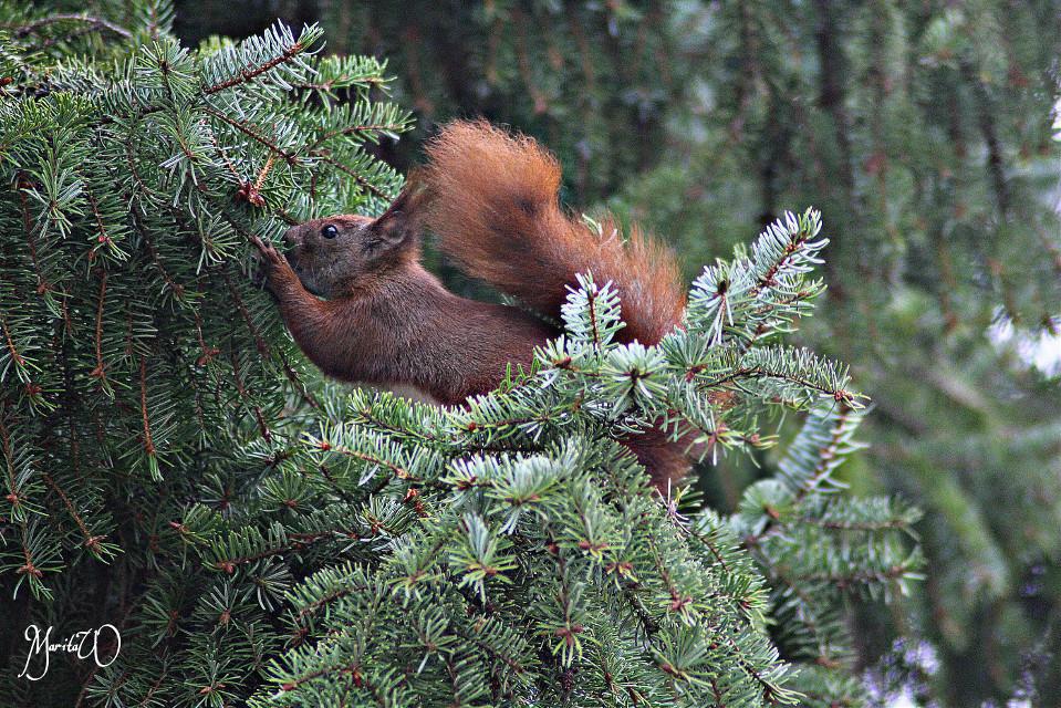 Through my Windows,  squirrel #petsandanimals#movement #sqiurrel#cute #nature #photography  #hdr