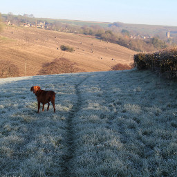 nature frost hills paths petsandanimals