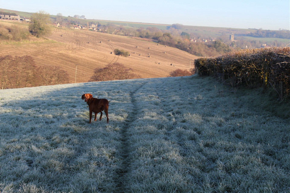 A path created as a consequence of erosion through use is known as a  desire path... This one's mine and Harveys. More visible on a frosty day.  #nature #frost #hills #paths #petsandanimals