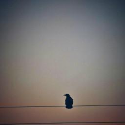 minimalistic crow evening ireland sky