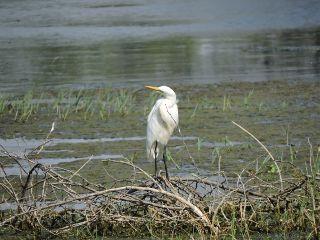 myinspiration india nature photography bird