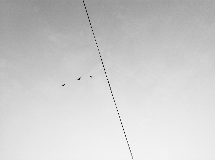 fly like the bird,free like the bird.