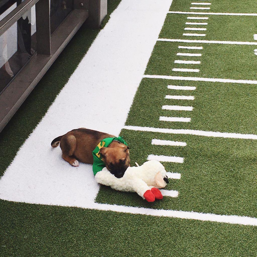 #puppybowl!! 💖😍 #FreeToEdit