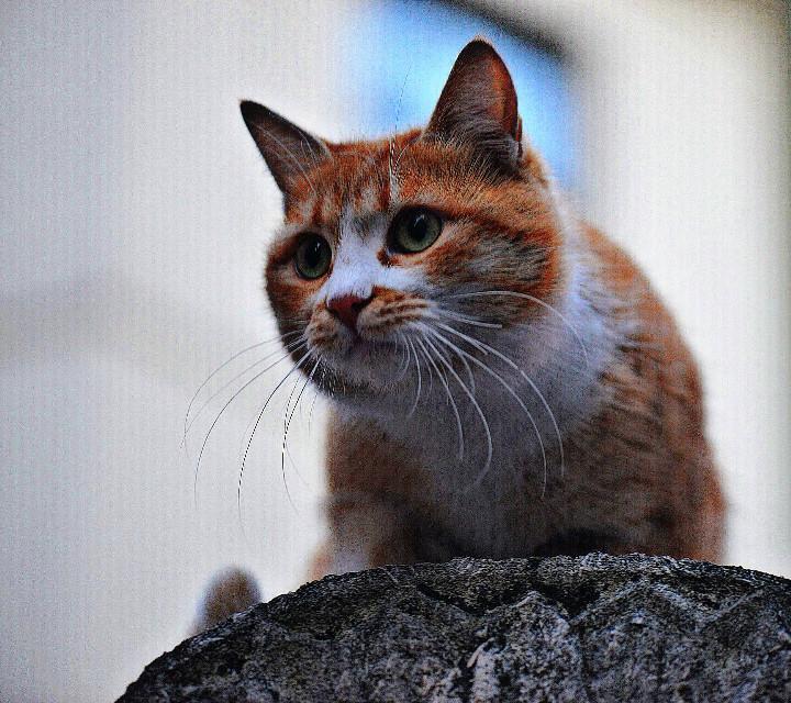 #cat #animals #cute #pets&animals