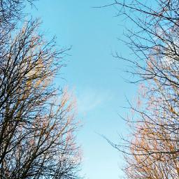 forrest pennington flash spring nature