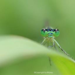 nature love photography petsandanimals