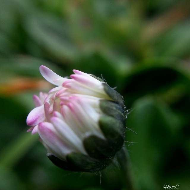 Tell me what you think. #spring #colorsplash #photography #freetoedit #macro #flower #macrophotography