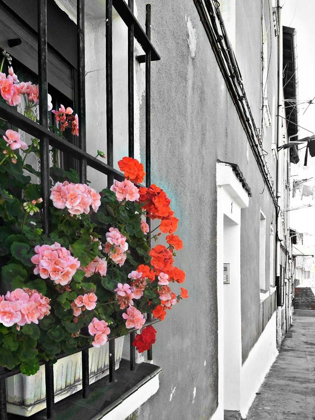 Good evening my dear friends! ♡  #facade #flowerarrangement #colorsplash #window