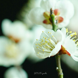 nature spring flower macro photograph