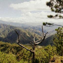 landscape travel forest adventure green
