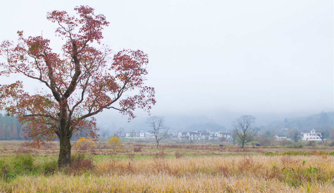 #landscapes #pastoral   #FreeToEdit