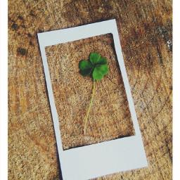 stpatricksday dailyinspiration freetoedit green wppgreen