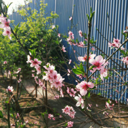 spring nowrooz nature flower good_day